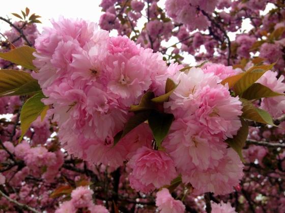 Poof Flowers