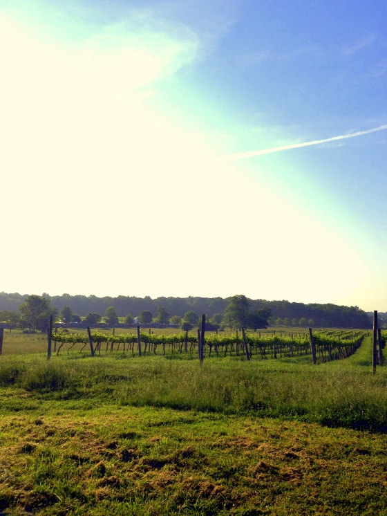 VA Wine Country